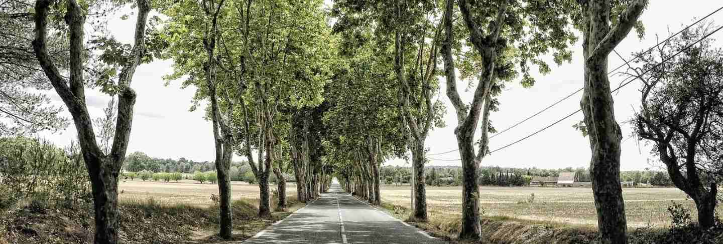 France mood trees avenue away tree route road