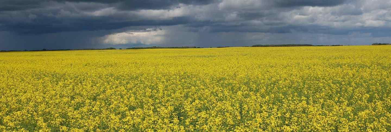 Sky landscape clouds plants flowers france field