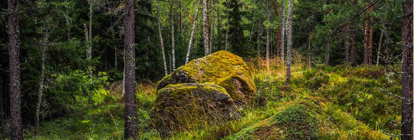 In the deep forest. the mystical rainforest. forest landscape with boulders covered with moss