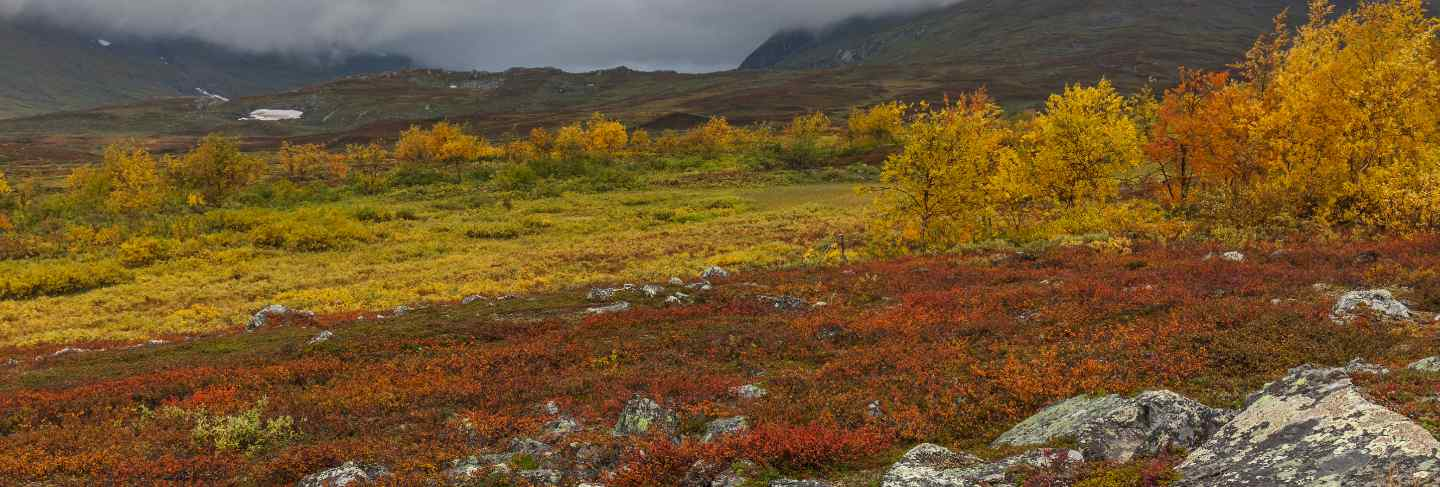 Autumn view of sarek national park, lapland, norrbotten county, sweden, near border of finland, sweden and norway. selective focus