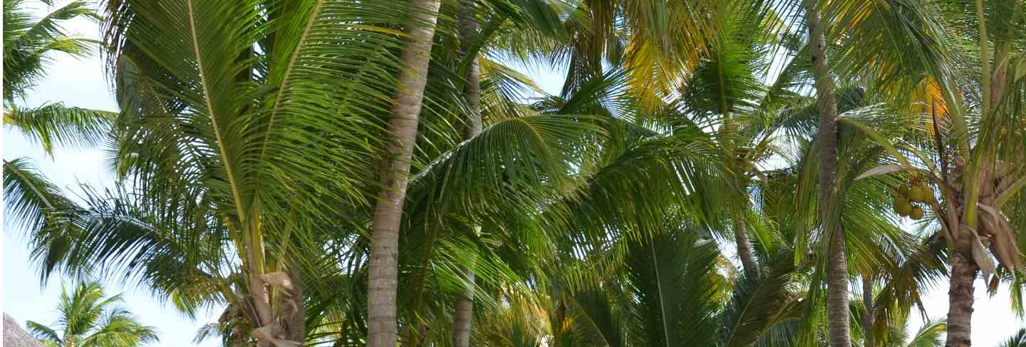 Exotic tropical beach with bungalows between the palm trees