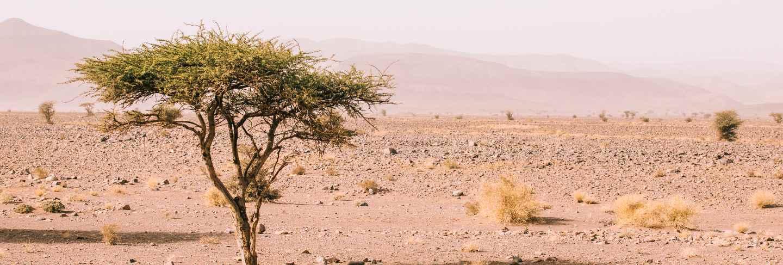 Desert landscape in morocco