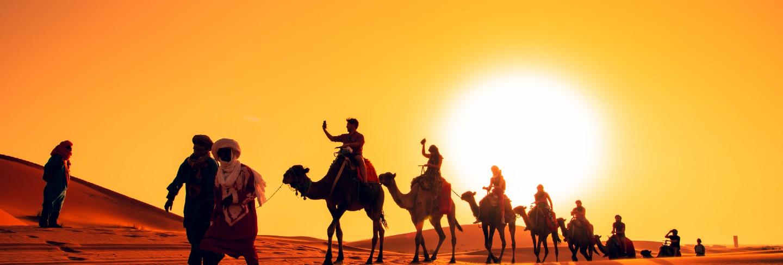 Camel caravan at sunset in the sahara desert.