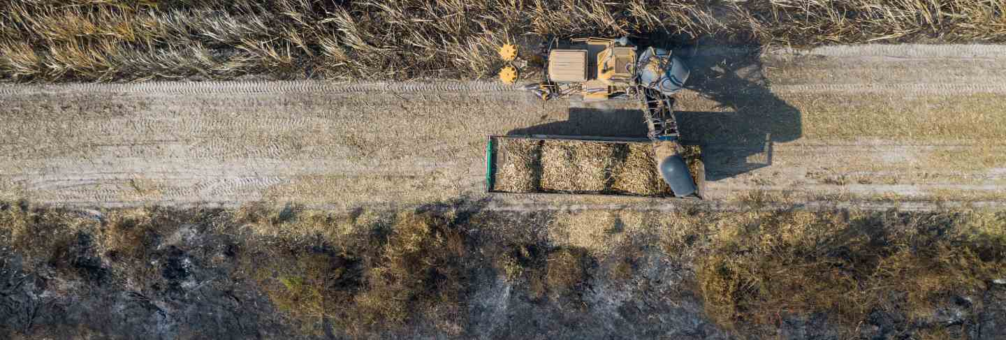 Aerial top view of sugarcane cutters are working outdoors