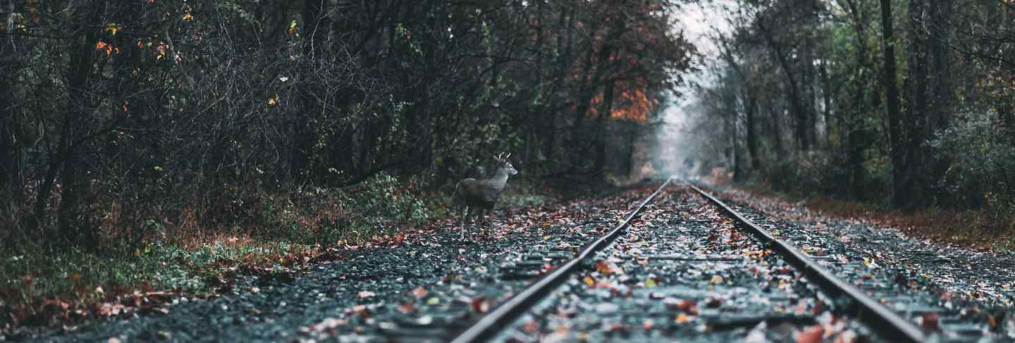 Beautiful shot of a railway in a forest during fall