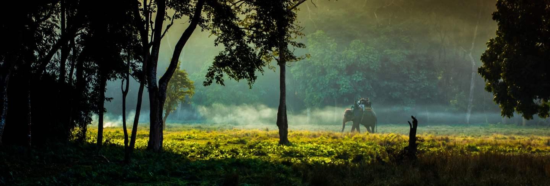 Wildlife animal elephant at chitwan national park, nepal. Premium Photo