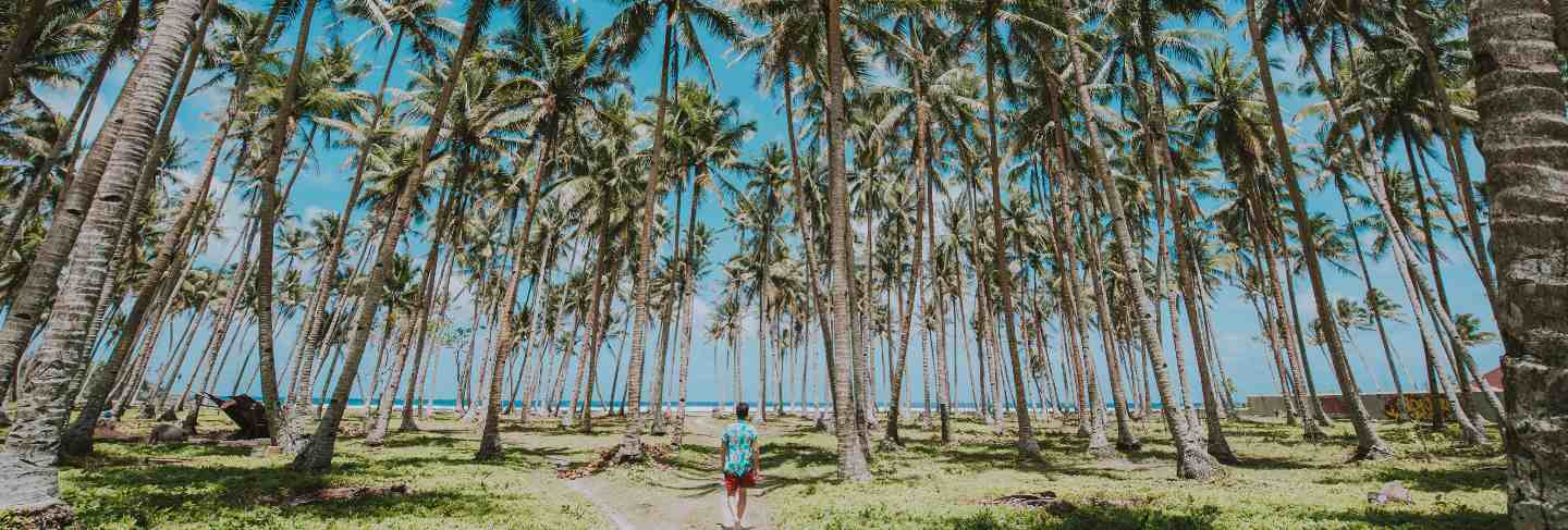 Man standing on the beach and enjoying the tropical place with a view. caribbean sea colors and palm trees in the background.