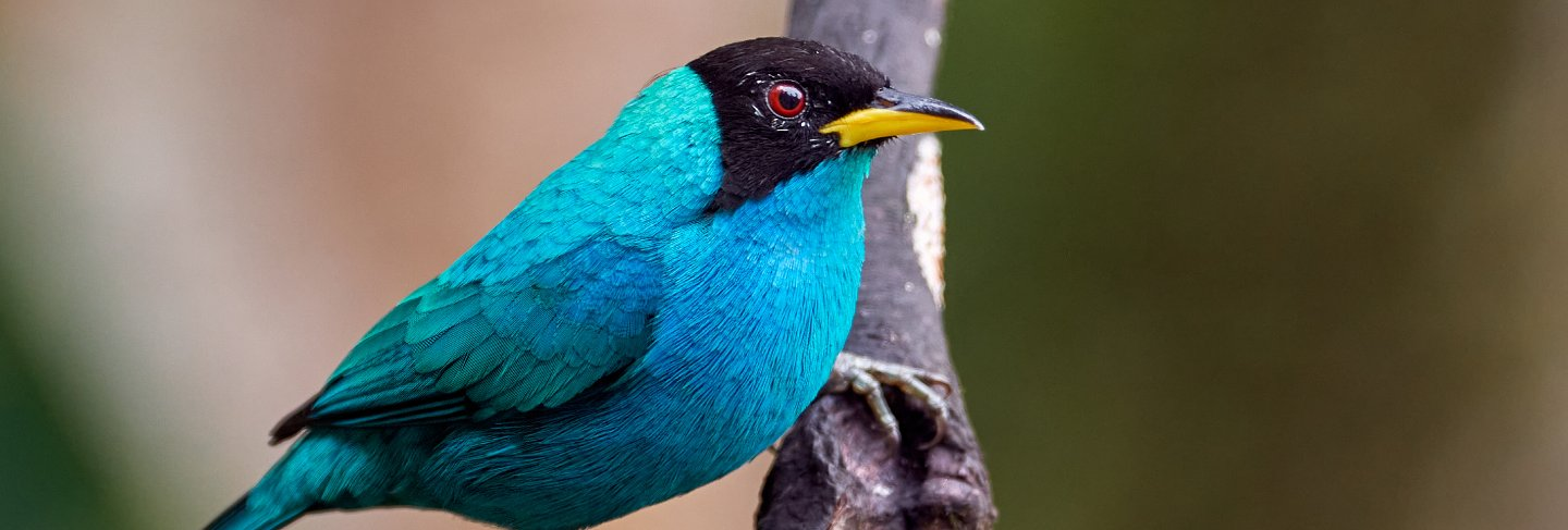 Cyan bird perched on a vertical branch