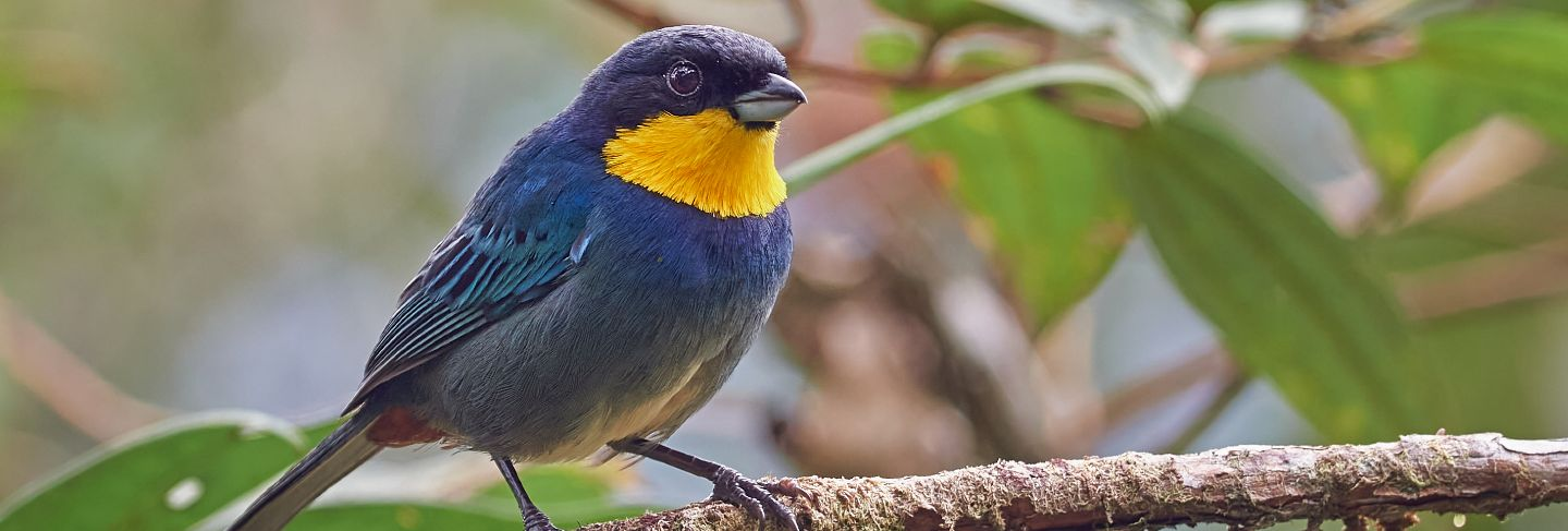 Incredible and colorful bird perched on a tree branch