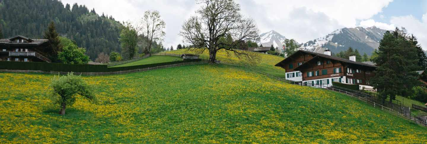 Landscape valley with plenty dandelions on Swiss mountains