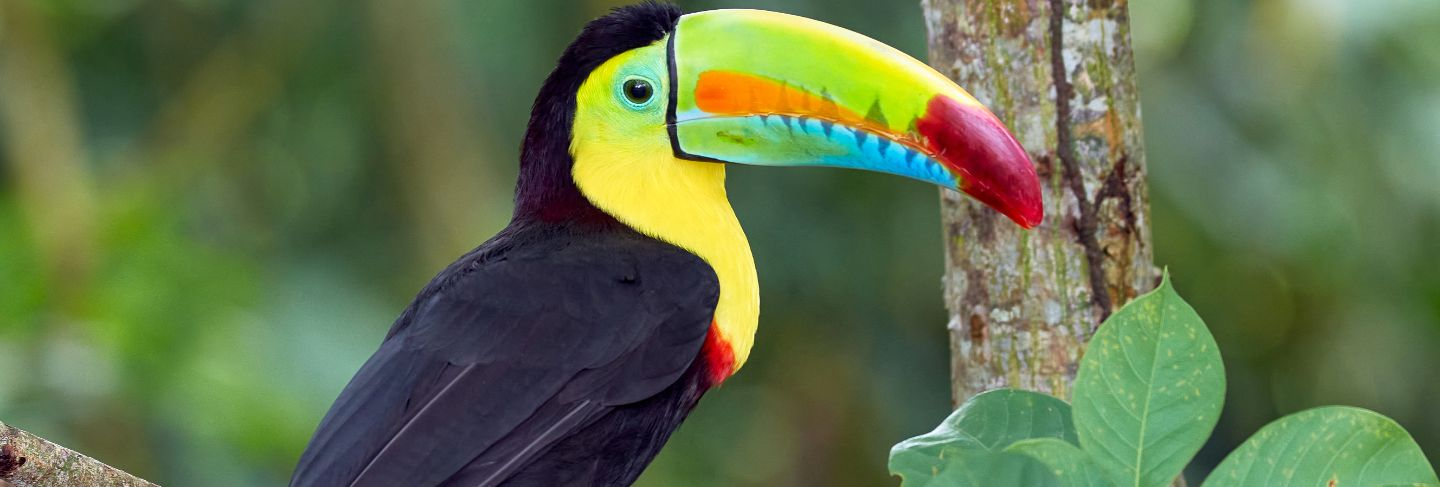 Beautiful and colorful bird perched on a tree