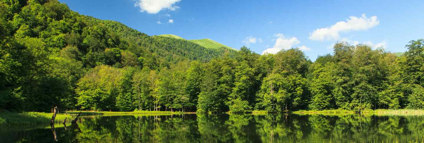 Beautiful the green scenery reflecting in the gosh lake, armenia