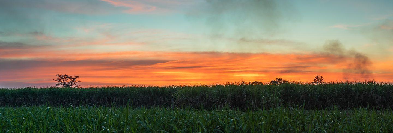 Sugar cane with landscape sunset sky photography nature background