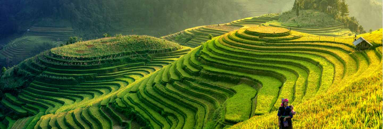 Panorama symbol of vietnamese rice terraces,mu cang chai.yenbai,vietnam