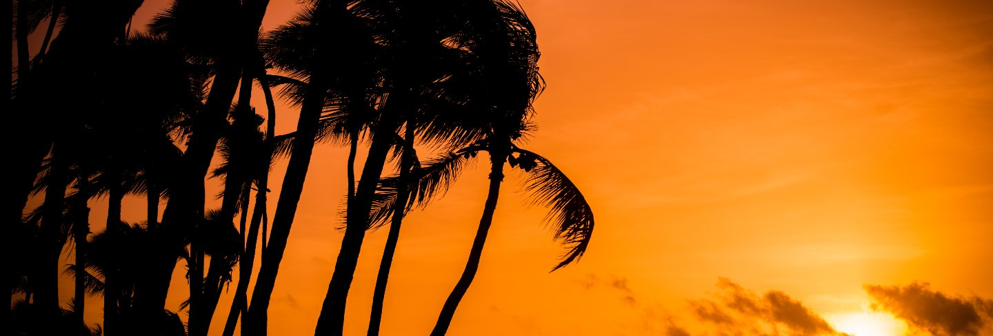 Sunrise with palms