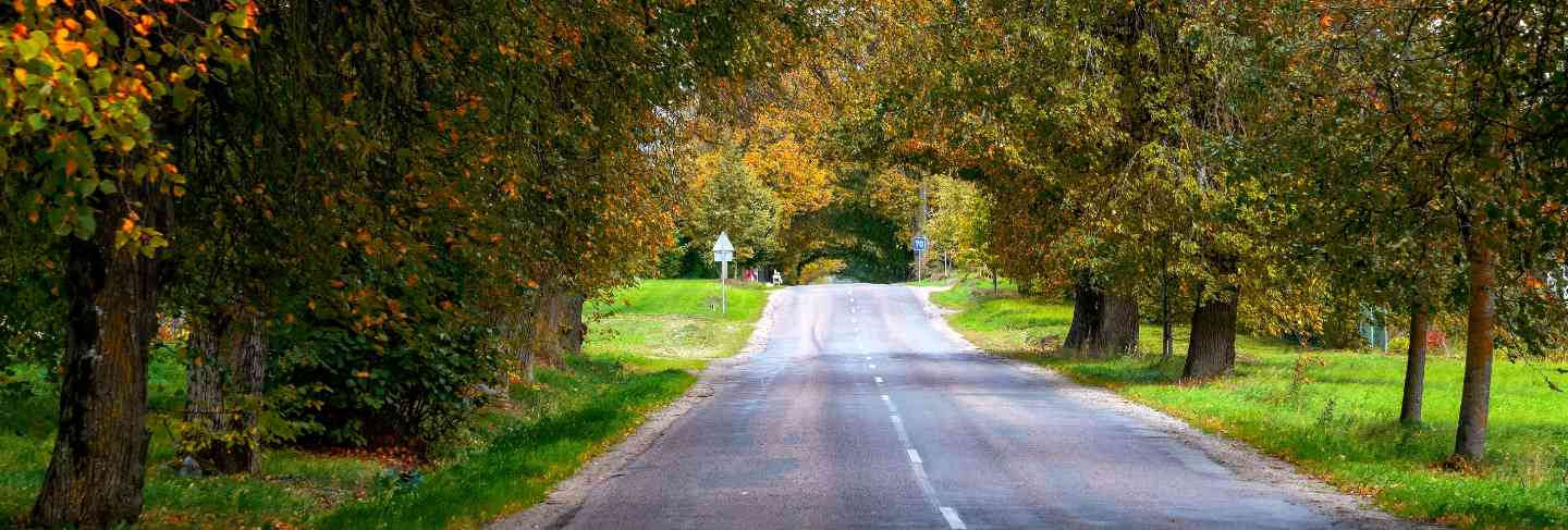 Autumn landscape. lonely rural road with deciduous alleys