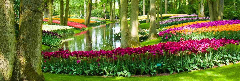 Tulip field in keukenhof gardens, lisse, netherlands