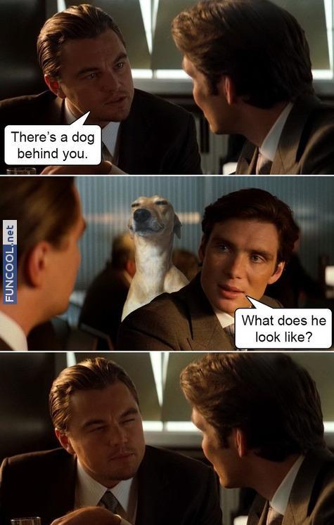 Inceptdog
