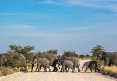 Namibia Ss413731183 Elephants In Etosha L M Spencer