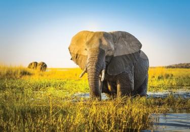 Luxury Botswana 2021