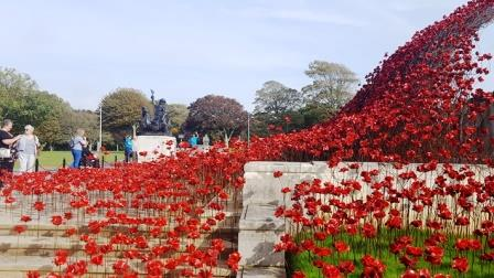 Poppies Wave at the Plymouth Naval Memorial