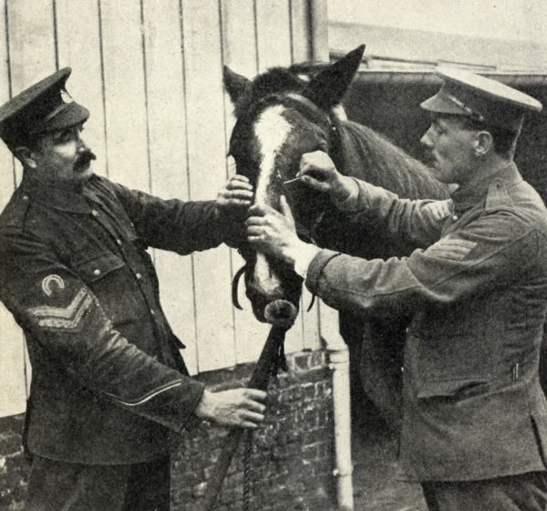 The Role Of Dogs In WW1 Trenches - Dogs in World War One