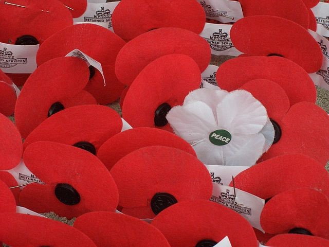 Battle of the Poppies - Would YOU consider waering a white poppy? (Wiki Image)
