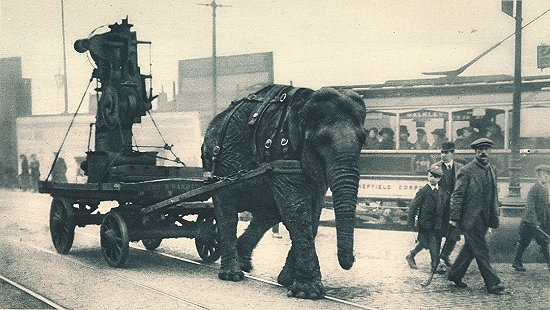 A military elephant in World War I pulls ammunition in Sheffield.  Source: Wiki