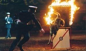RAF Police Dog Demonstration Team