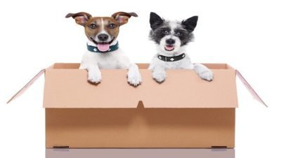 How to Transfer Pets and Money Abroad