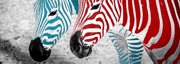 Coloured Zebras