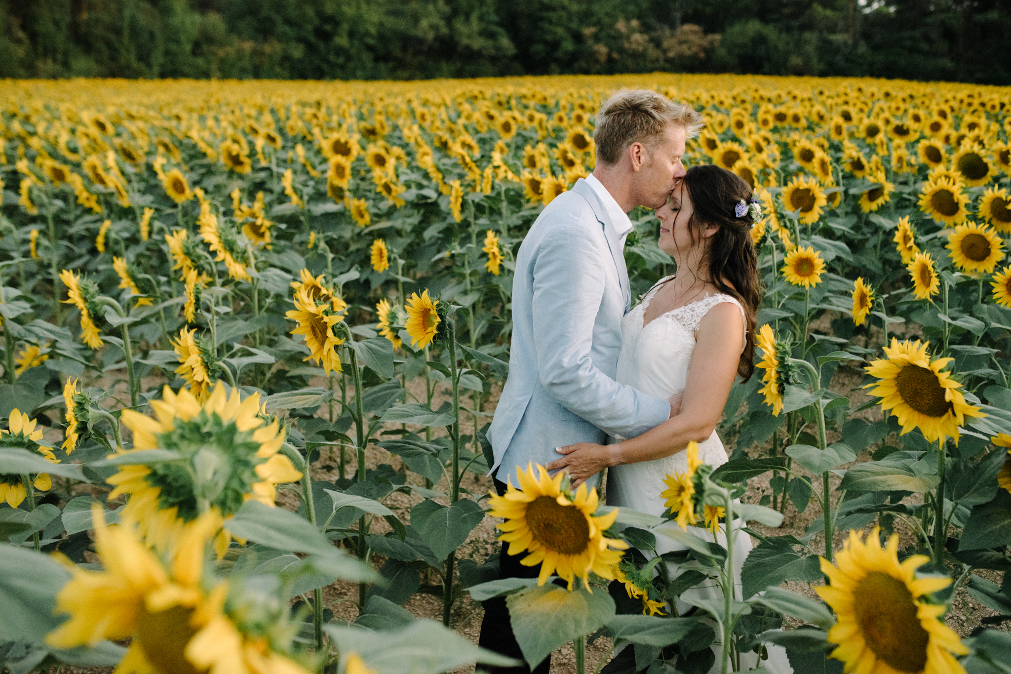 sunflower field, dordogne, marry me in france, the elegant domaine
