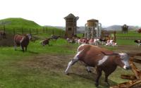 Wildlife Park 2 - Farm World download