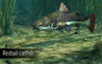 ultimate fishing simulator - amazon river download