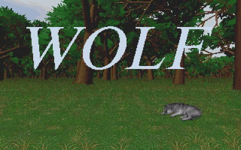 Wolf - title cover