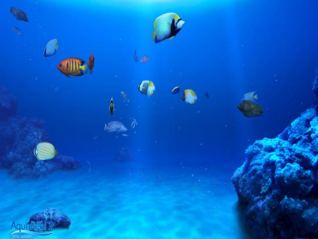 DigiFish Aqua Real 2 - title cover