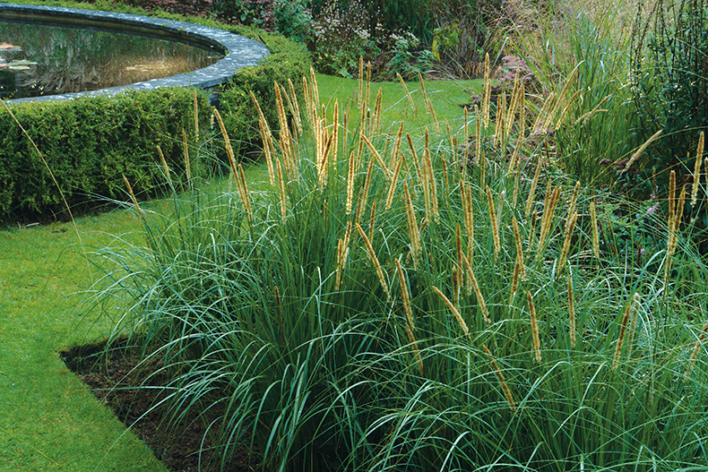 Top ornamental grasses for designers garden design journal for Short variegated grass