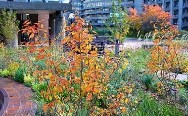 Review: SGD Autumn Conference - Out of the Shrubbery