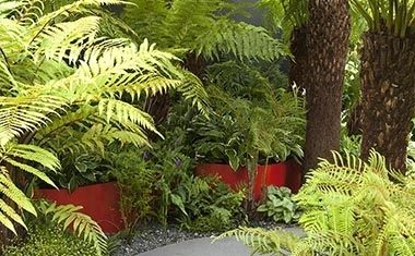 Top ferns for foliage