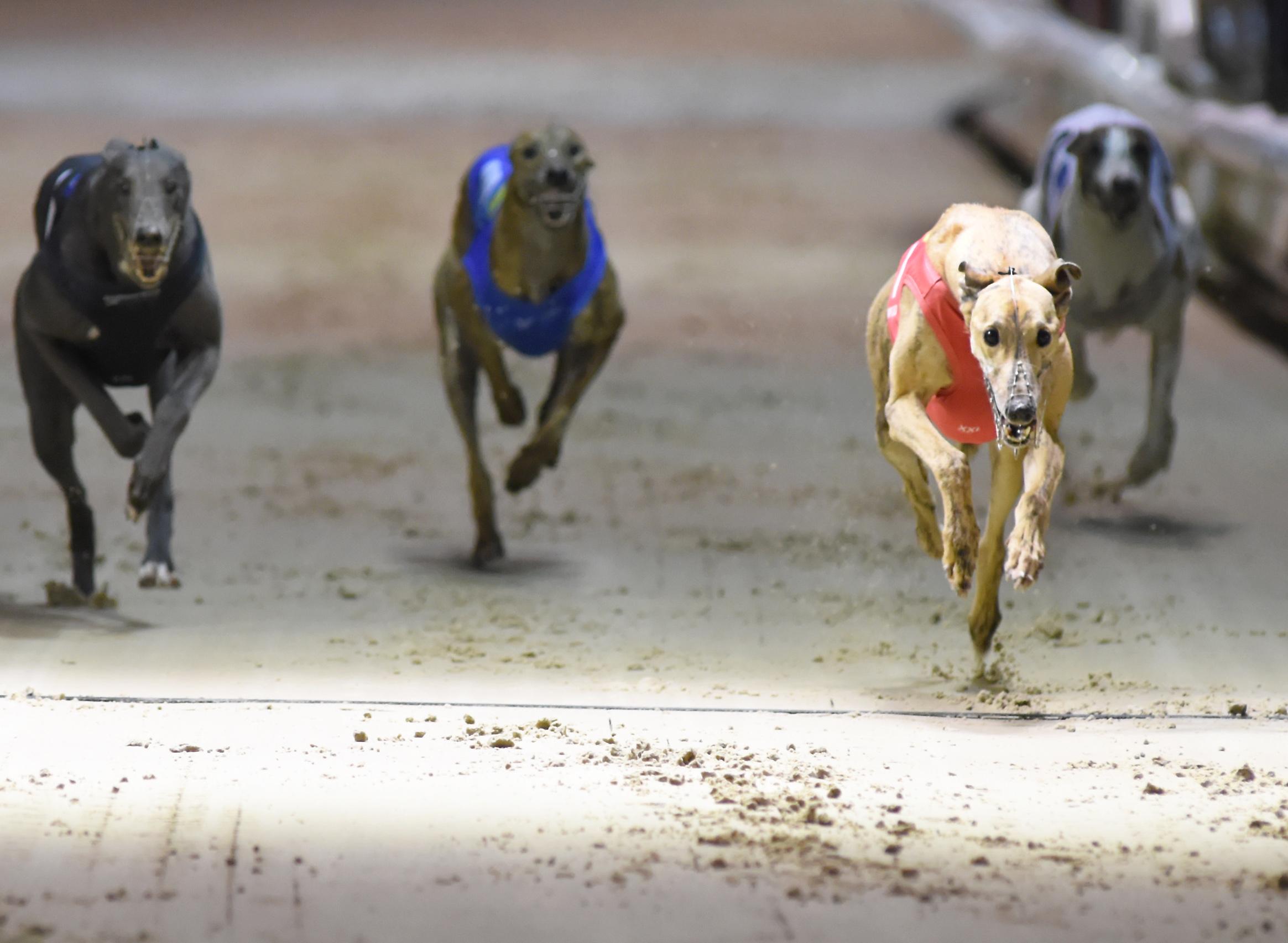 British Greyhound Results