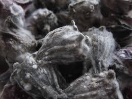 Mold Spores - Grey