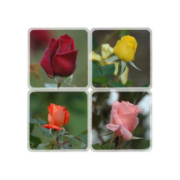 Rose Coasters - Square Coaster Set