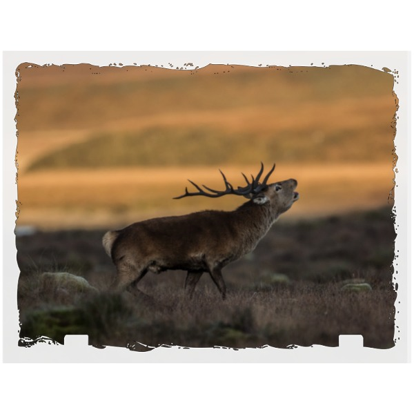 Red deer stag - Rectangle Slate Photo Panel