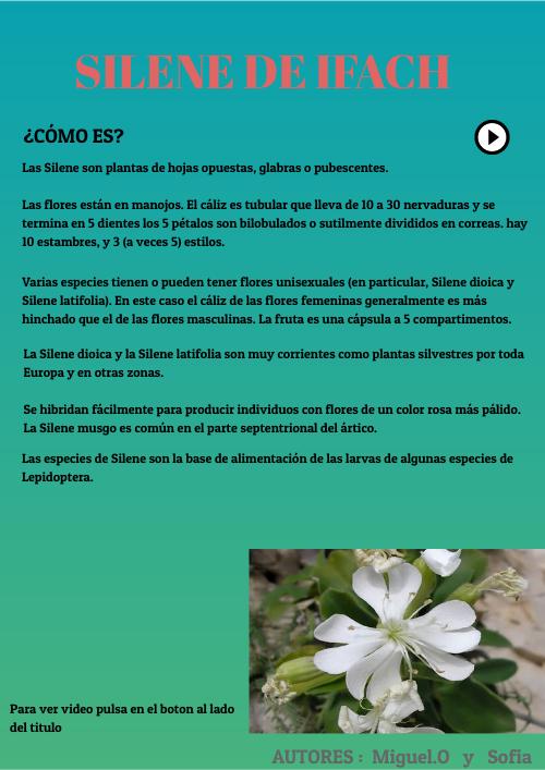 5b Silene De Ifach By Ordenador12 On Genial Ly