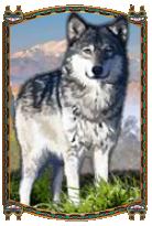Il simbolo Generale della slot machine Wolf Rising