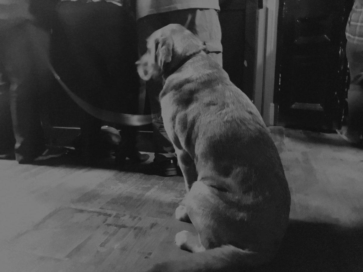 Deaf School - Guide Dog