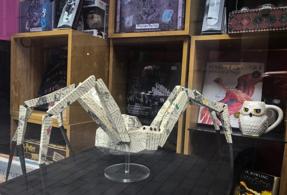Harry Potter spider (photo credit: Lucy McLachlan)