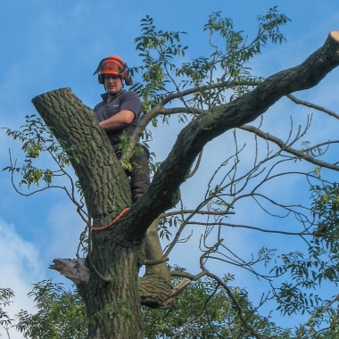 Brockwell Tree Surgery & Forestry Consultancy
