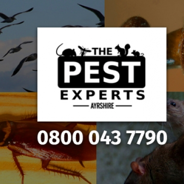 The Bed Bug Experts