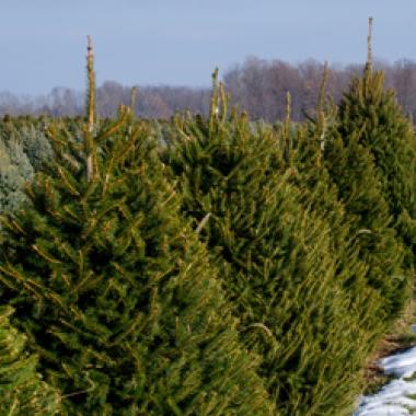 Hassle Free Christmas Tree